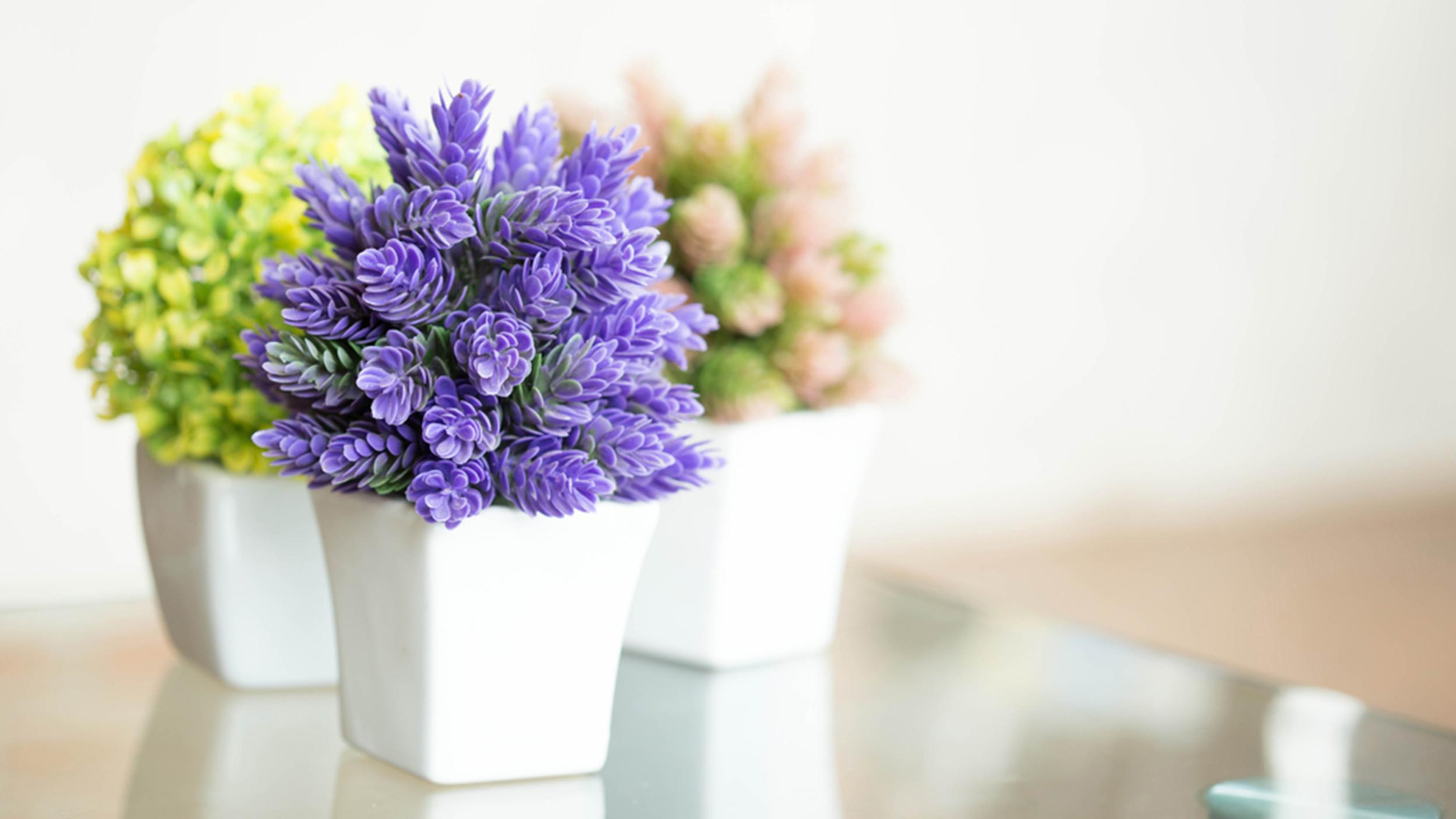 Pretty Indoor Flowering Plants