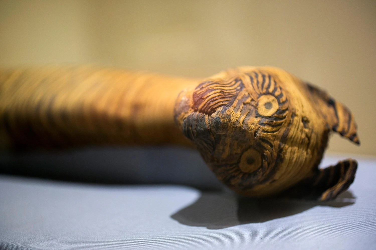 California Exhibition Reveals Ancient Mummified Pets