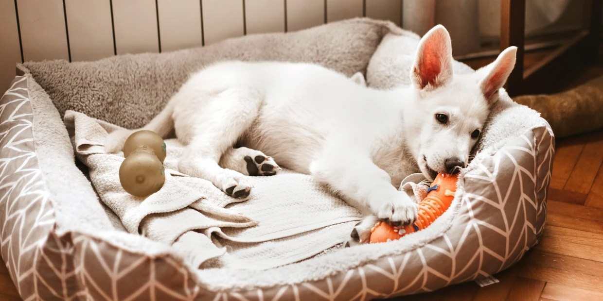 The Best Dog Beds Of 2020 According To Experts