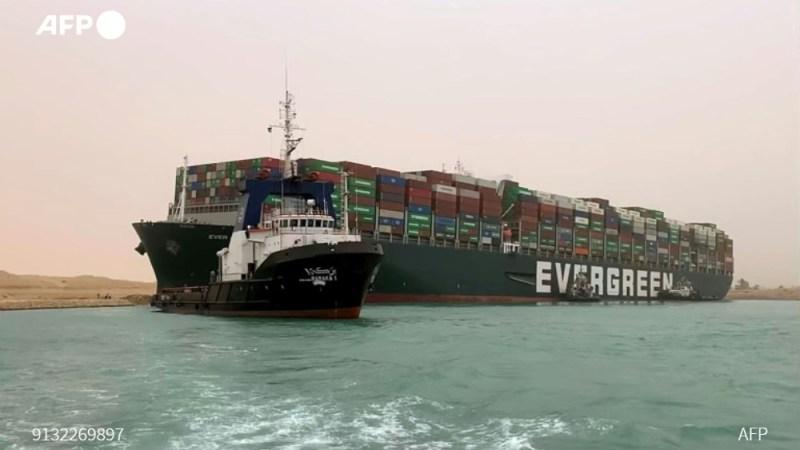 Canal de Suez : des milliers d'animaux vivants coincés sur des cargos