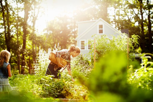 Media Bakery ID# MNT0006498 A woman picking vegetables in a garden at the end of the day. A child walking through tall plants.