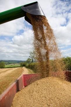 Media Bakery ID: RHD0078169 Combine harvester, Devon, England, United Kingdom, Europe
