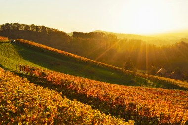 Media Bakery ID: RHD0078308 Vineyard landscape, Ortenau, Baden Wine Route, Baden-Wurttemberg, Germany, Europe