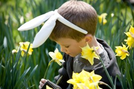 Media Bakery ID: LUV0012956 A young boy smelling a daffodil, wearing bunny ears