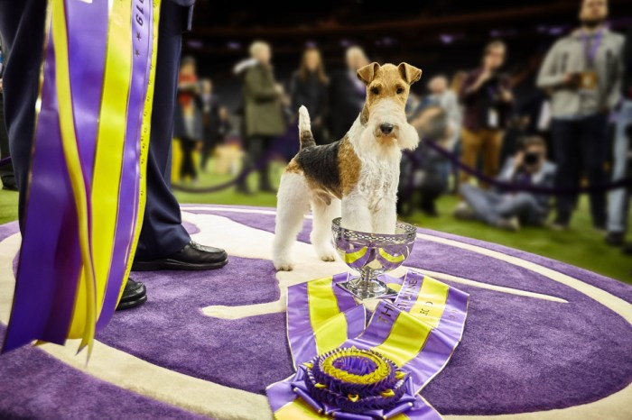 Westminster Dog Show 2019 winner
