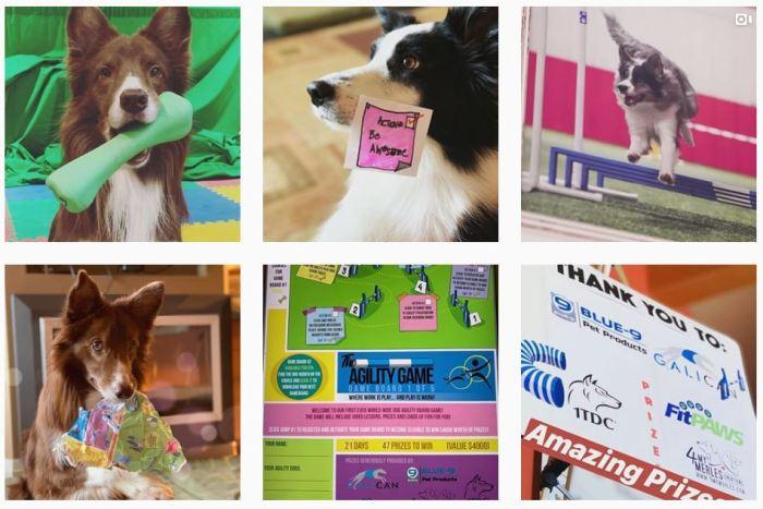 Dog Agility Blogs We Love: @susangarrrettdogtraining on Instagram