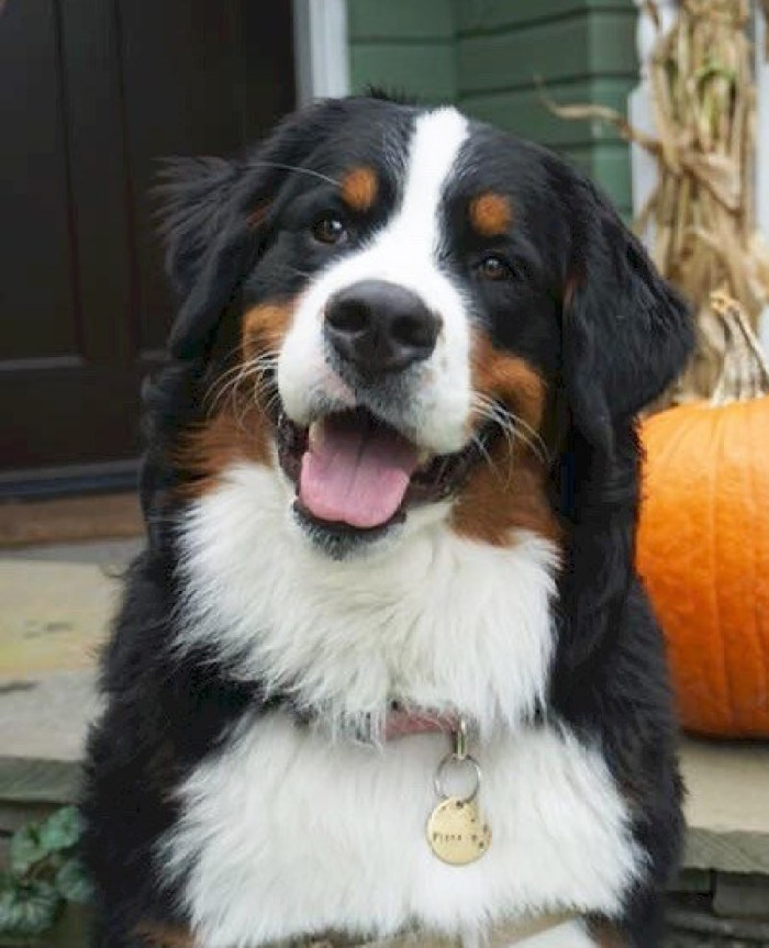 American Kennel Club Millionth AKC Canine Good Citizen, Fiona
