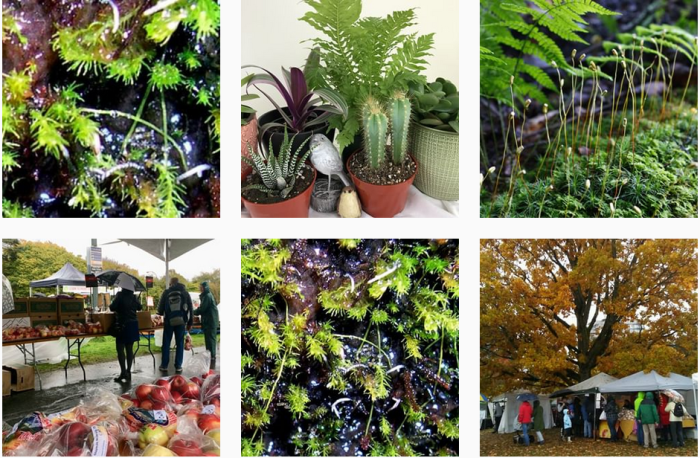 Botanic Garden Blogs We Love - @ubcgarden on Instagram