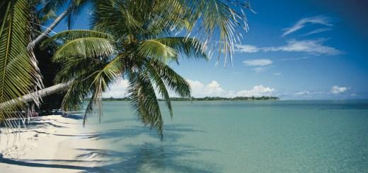 On PR Newswire - March 6 2020 - Tripadvisor Travelers' Choice - Image of a beach and palm tree