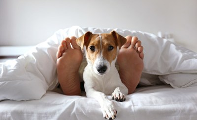 Expedia Dog-Friendly Hotels | Image of a person and dog laying on a bed