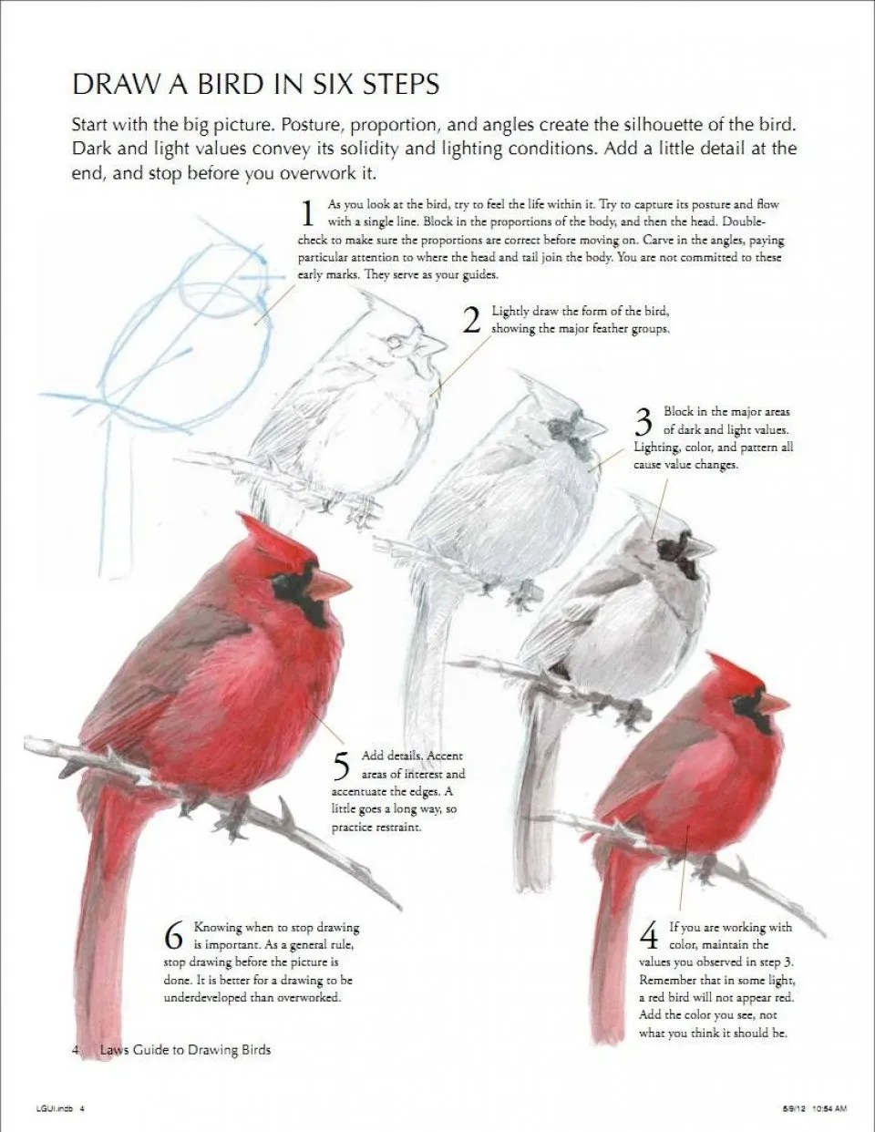 The Laws Guide To Drawing Birds John Muir Laws David