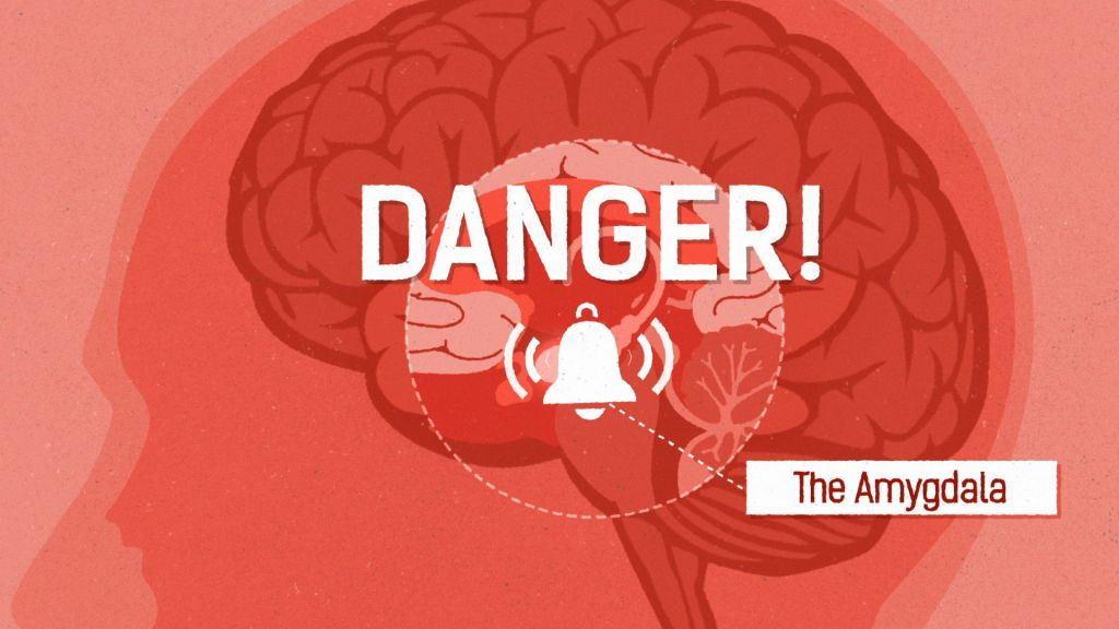 Close up of head showing brain, and the amygdala with the word danger and a bell ringing symbol