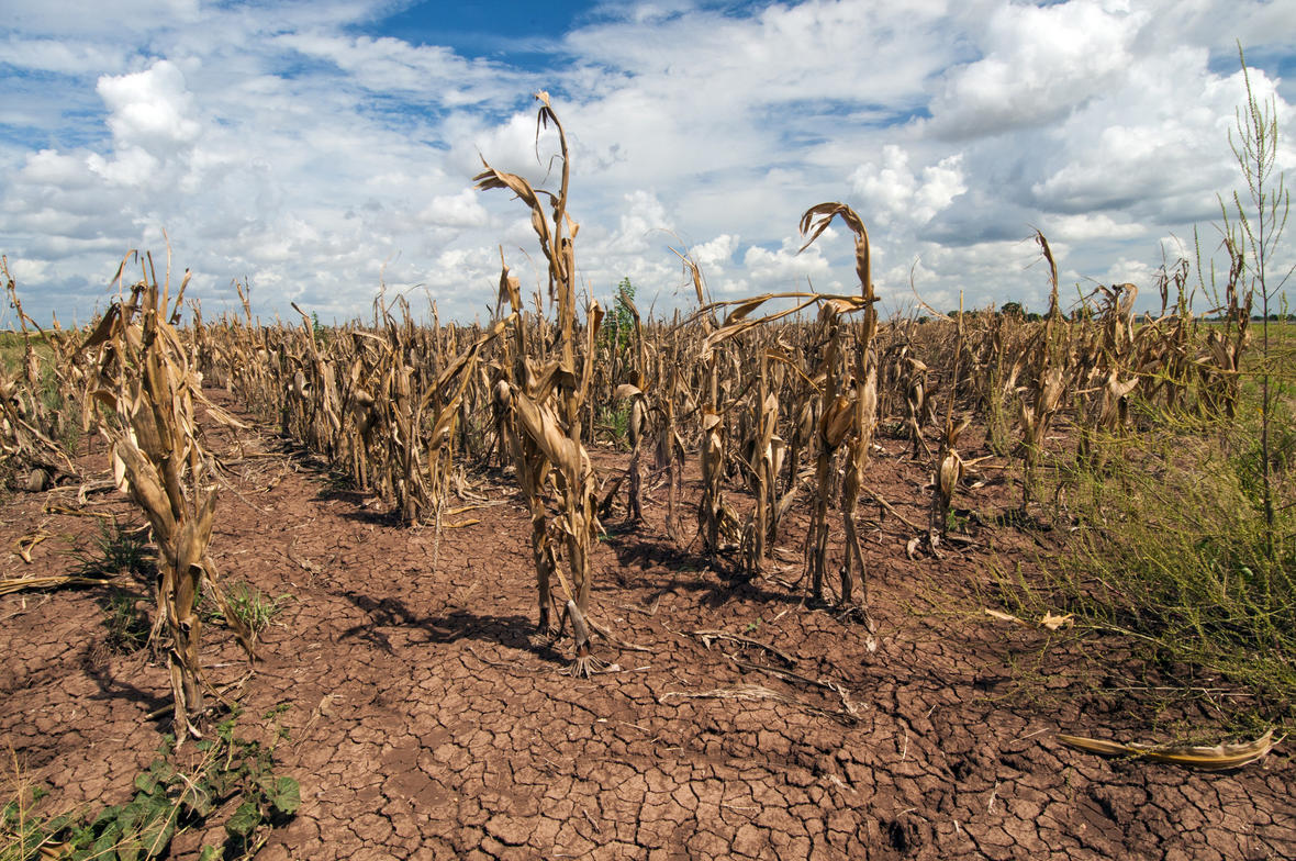 Image result for drought pics