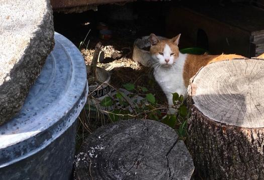 A Feral Cat in His Home