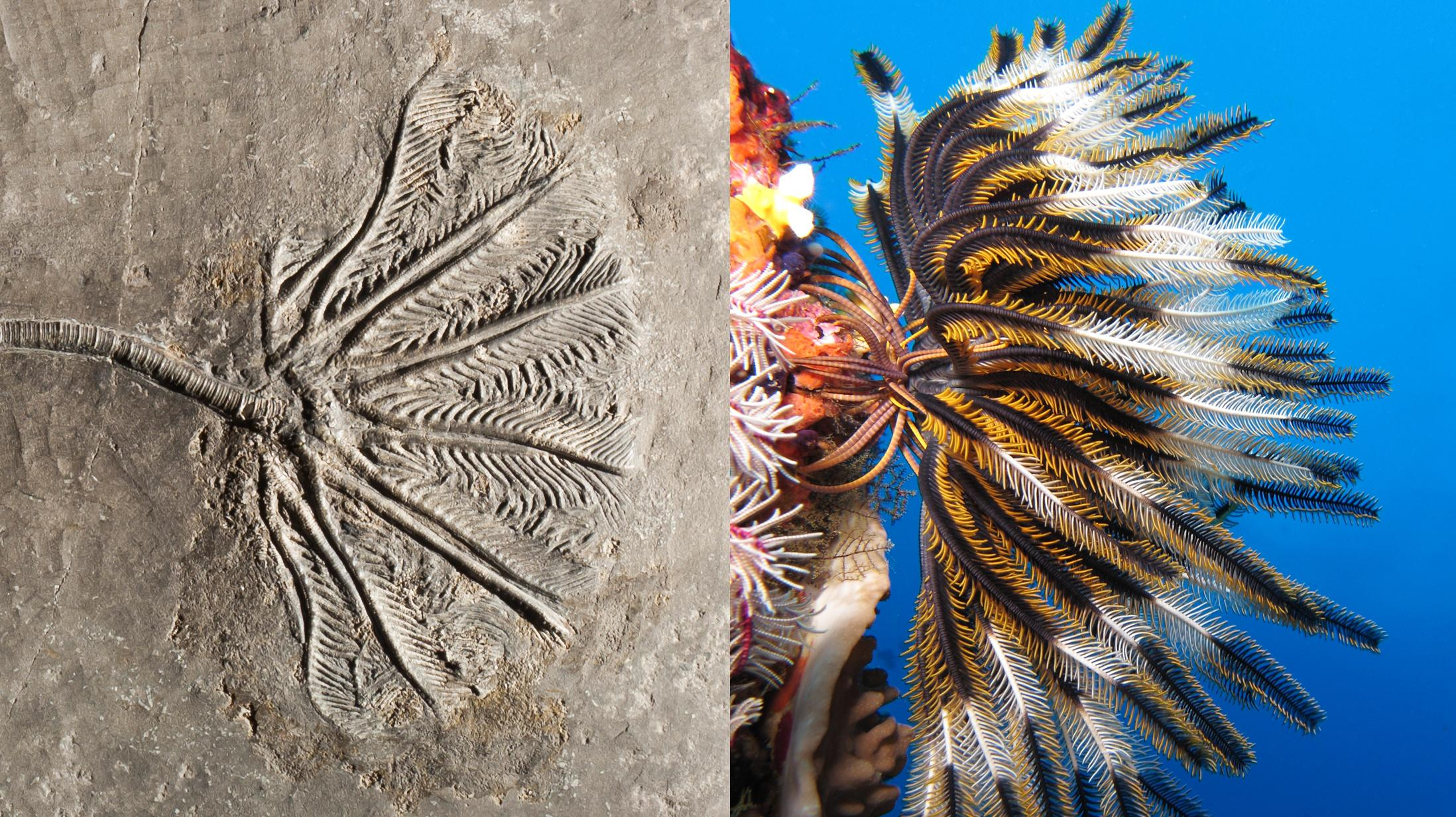 Image result for living crinoid