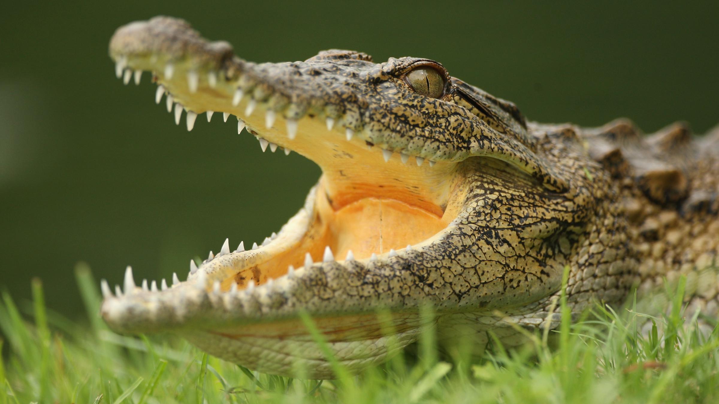 Yikes 15 000 Crocodiles Escape Farm In South Africa Area