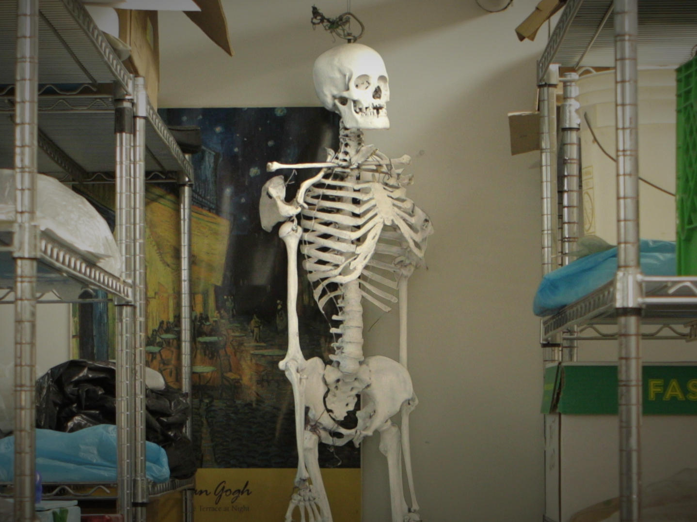 Classroom Skeleton Whose Bones Are These