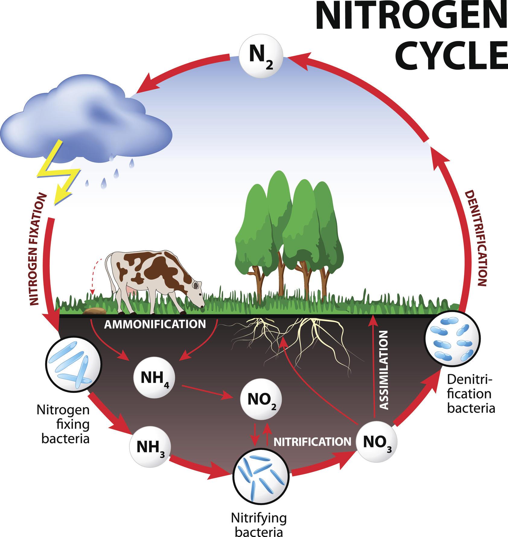 Nitrate Risk Near Farms A Hydrogeologist Explains