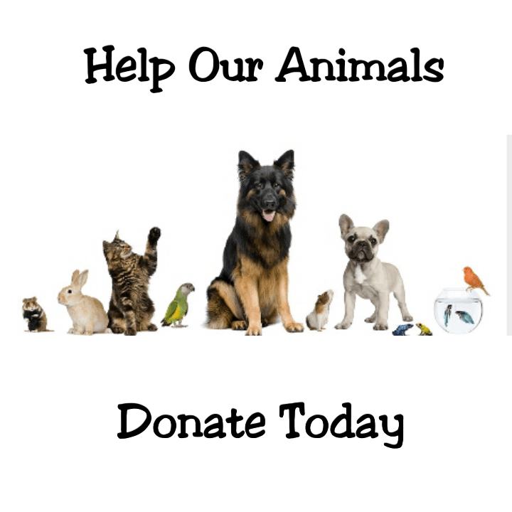 Christmas Donations For Local Animals WFIT