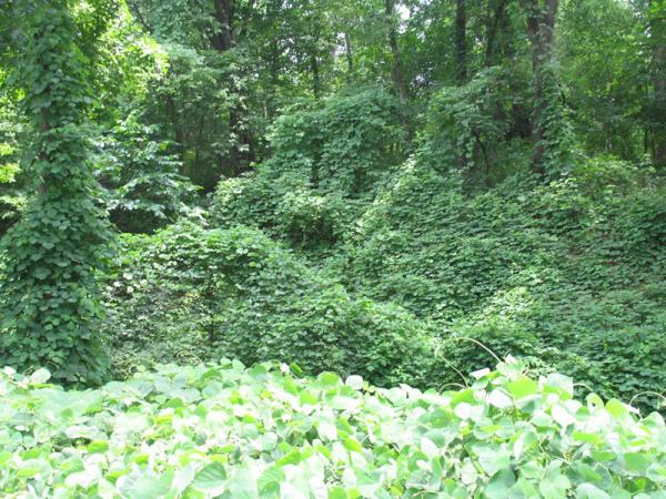 May is Invasive Species Awareness month in Illinois | WSIU