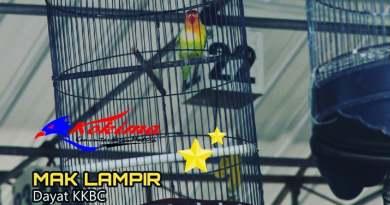 Lovebird Mak Lampir Milik Dayat KKBC Sampang