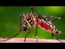 Zika virus sexual transmission case in U.S. worries WHO
