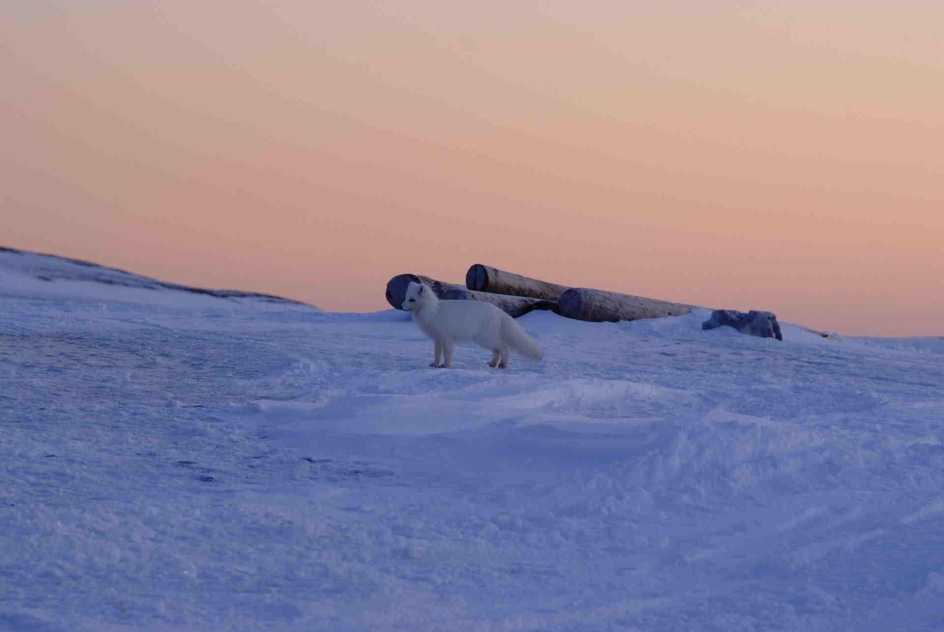 Девушки не смогли вернуться домой из экспедиции по Арктике.