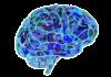 Neuromarketing - eine Unternehmensaufgabe