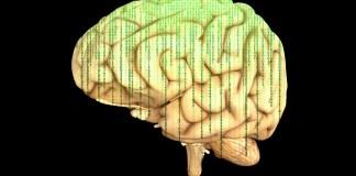 Neuromarketing - neue Instrumente im Marketing