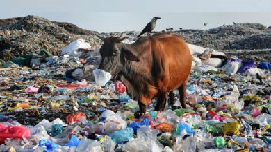 Photo of നാല് മണിക്കൂറോളം നീണ്ട ശസ്ത്രക്രിയ;പശുവിന്റെ വയറിൽ നിന്നും പുറത്ത് എടുത്തത് 21 കിലോ പ്ലാസ്റ്റിക്ക്
