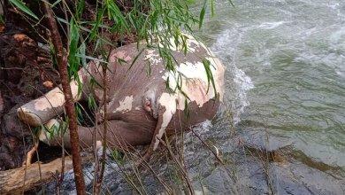 Photo of വെള്ളിയാറിൽ ഒഴുകിയെത്തിയ നിലയിൽ കാട്ടാനയുടെ ജഡം;  ജഡത്തിന് ദിവസങ്ങളുടെ പഴക്കം