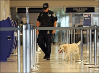 jfk airport plot has all the hallmarks of staged terror