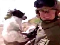 abc news runs defense for puppy killer