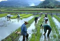 US using food crisis to boost bio-engineered crops