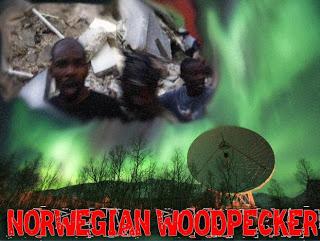 clyde lewis' ground zero media: norwegian woodpecker