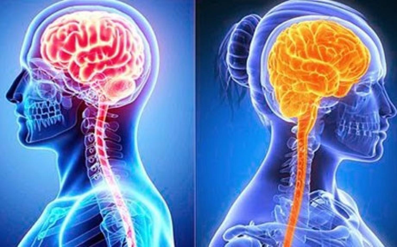 دماغ المرأة نشط أكثر من دماغ الرجل