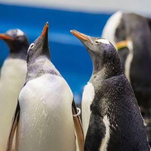 I Want to Model My Future After These New Penguin Dads
