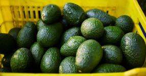 Avocados recalled in 6 states over possible listeria