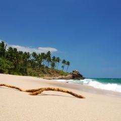 Profiter d'un séjour de rêve à Negombo, au Sri Lanka
