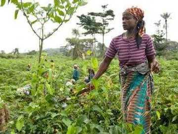 Le Gabon doit définir ses priorités et réformer pour être plus attractif