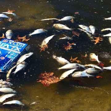 Mystérieuse mort de milliers de poissons dans l'Ogooué: l'ANPN alerte.
