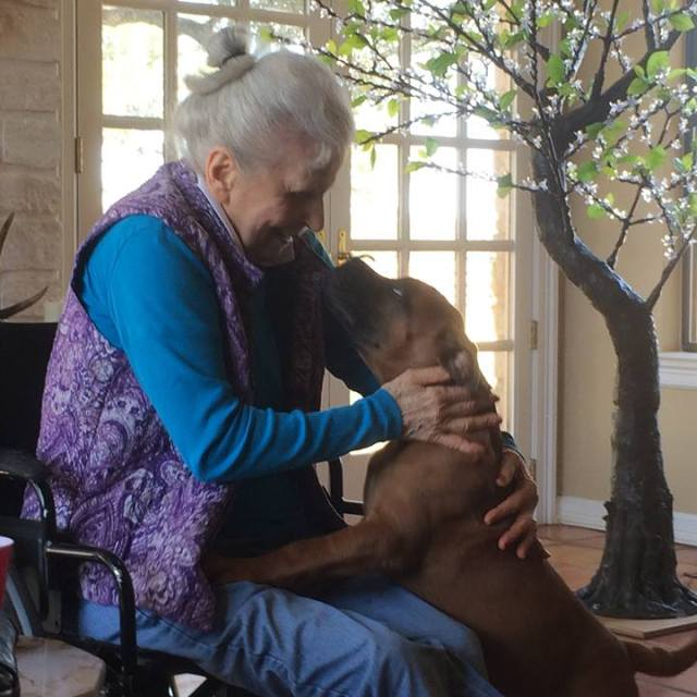 Mediators of Texas Partners with Mrs Allens Rescue Ranch
