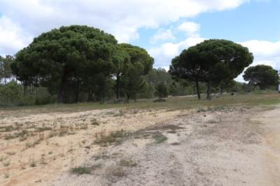 7.5 Hectares near Beach and Town
