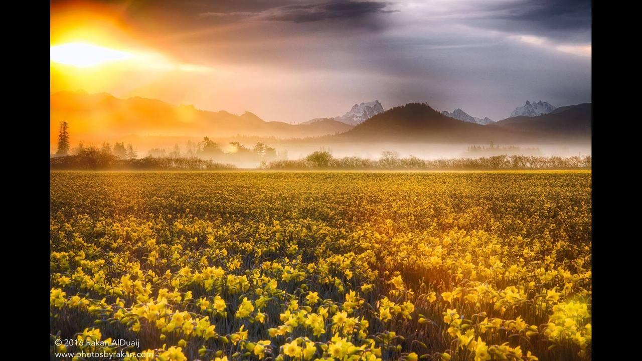PHOTOS: Skagit Valley in bloom, spring 2016 - (12/13)
