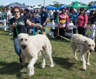 Copiague, NY - Janice Preisz from Baldwin, NY is showing off her two Irish Wolfhounds, Declan Shamus and Shannon, at the Long Island Pet Expo in the Park at Tanner Park in Copiague on September 14, 2014. The crowds are gathered to admire the two largest dogs at the expo.