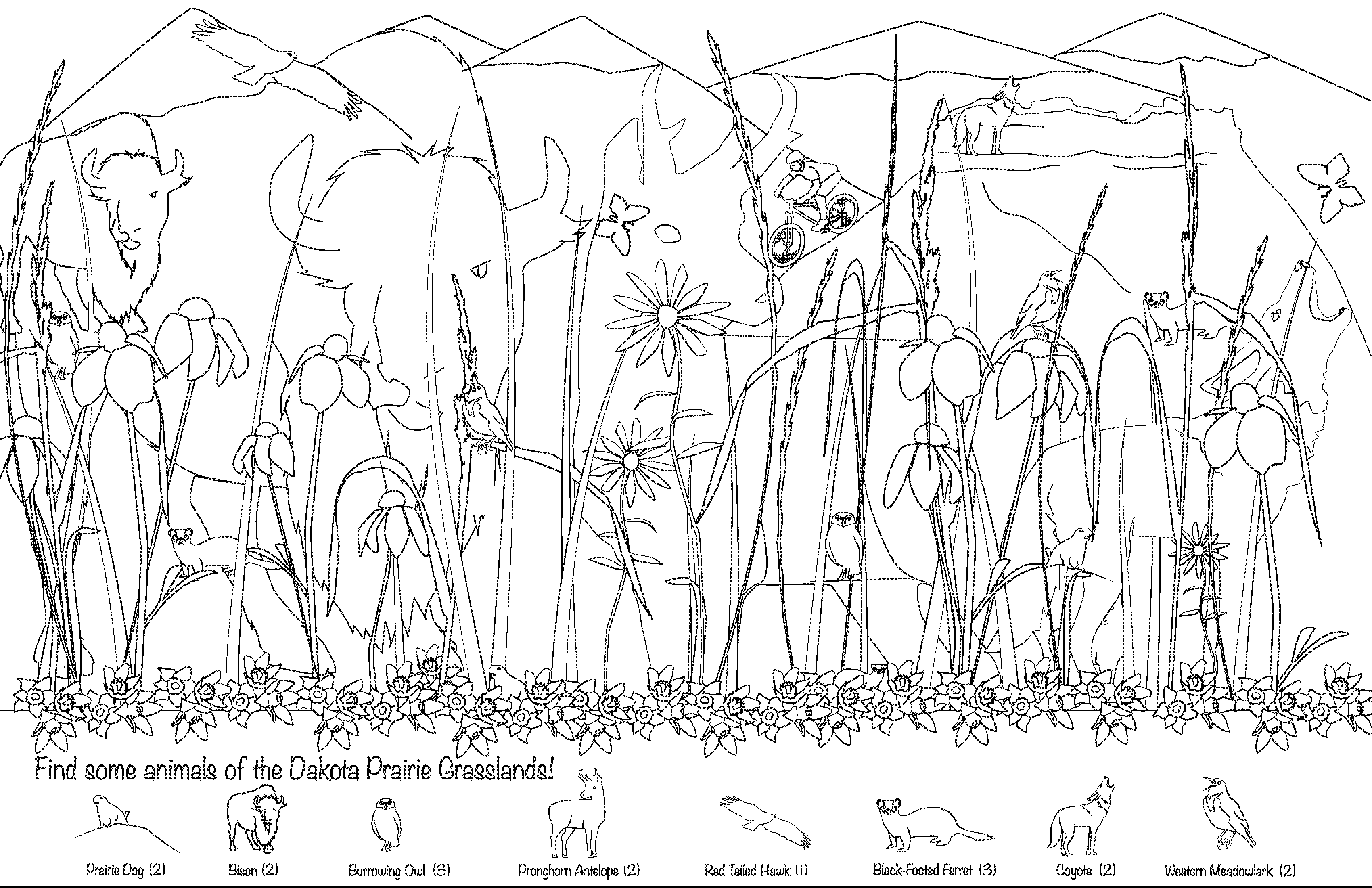 Illustration and Graphic design of hidden animals coloring page