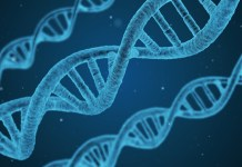 Genome sequencing, Drug-resistant TB, MDR TB, CRyPTIC, Tuberculosis