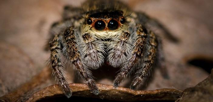 Veninul de păianjen, eficient în tratamentul post AVC