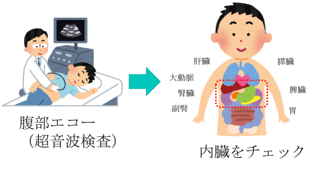 abdominal echo