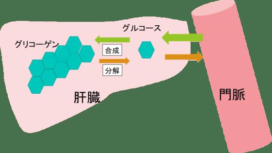 liver 3